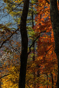 Fall Trees at Whiteside