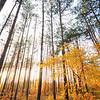 Kyiv, Ukraine - forest near Irpen in fall -