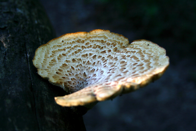 Sun dappled forest mushroom.