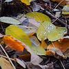Kyiv, Ukraine - forest near Irpen in fall - dewdrops on fallen leaves