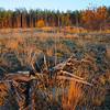 Kyiv, Ukraine - forest near Irpen in fall - tree skeleton ablaze