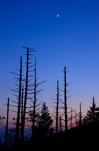 A sliver of moon rises above the bare trees on Clingman's Dome, Great Smoky Mountains.