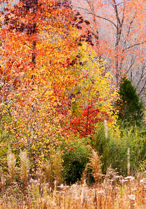 Fall color in a field near my home in Rutherfordton, NC.