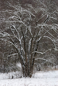 The snow covered branches of a bare tree.