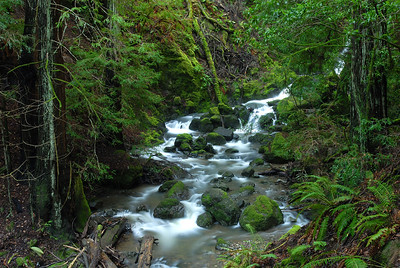 © Joseph Dougherty. All rights reserved.   Cataract Creek running through redwoods and California laurel on Mt. Tamalpais.