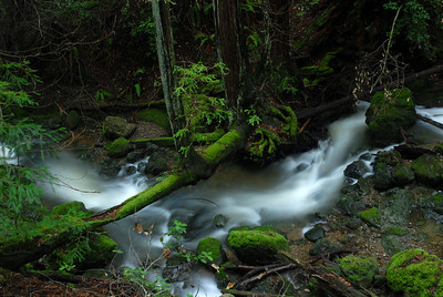 © Joseph Dougherty. All rights reserved.   Cataract Creek passing under redwoods and ferns on Mt. Tamalpais.