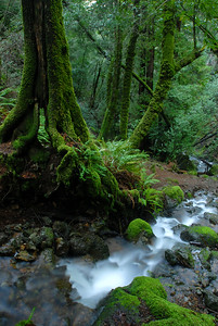 © Joseph Dougherty. All rights reserved.   A small feeder stream running into Cataract Creek.
