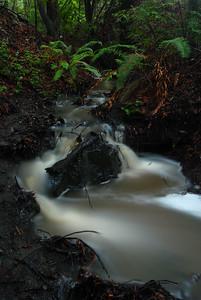 © Joseph Dougherty. All rights reserved.   Rainstorm runoff creates a seasonal stream through a California forest.