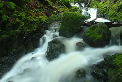 © Joseph Dougherty. All rights reserved.   Cataract Creek tumbles over moss-covered boulders  on Mt. Tamalpais.