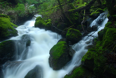 © Joseph Dougherty. All rights reserved.   A side-stream feeding into Cataract Creek on Mt. Tamalpais.