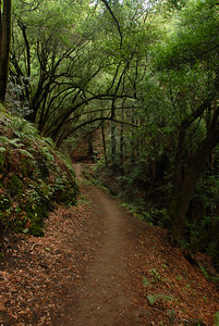 © Joseph Dougherty. All rights reserved.   Trail through the trees with fern covered hill slopes.