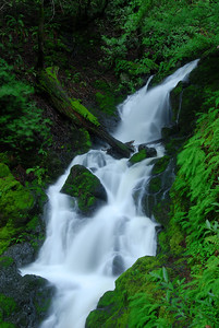 © Joseph Dougherty. All rights reserved.   Cataract Falls plummeting down Mt. Tamalpais past banks covered with moss and ferns.