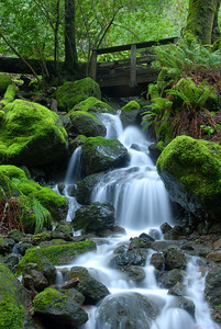 © Joseph Dougherty. All rights reserved.   Flowing stream running over moss-covered rocks.