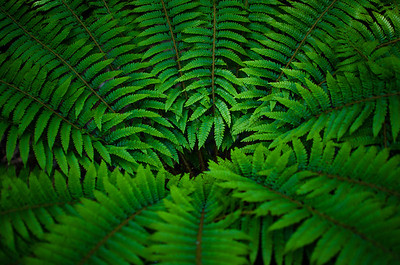 Green Fern Glowing In Morning Light