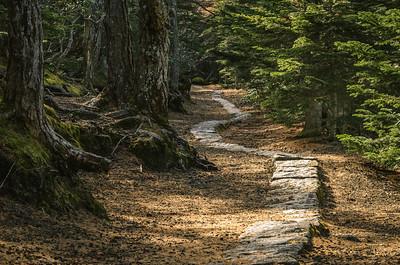 Fuji's Stone Path