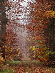 Forest in Denmark. Photo: Martin Bager.