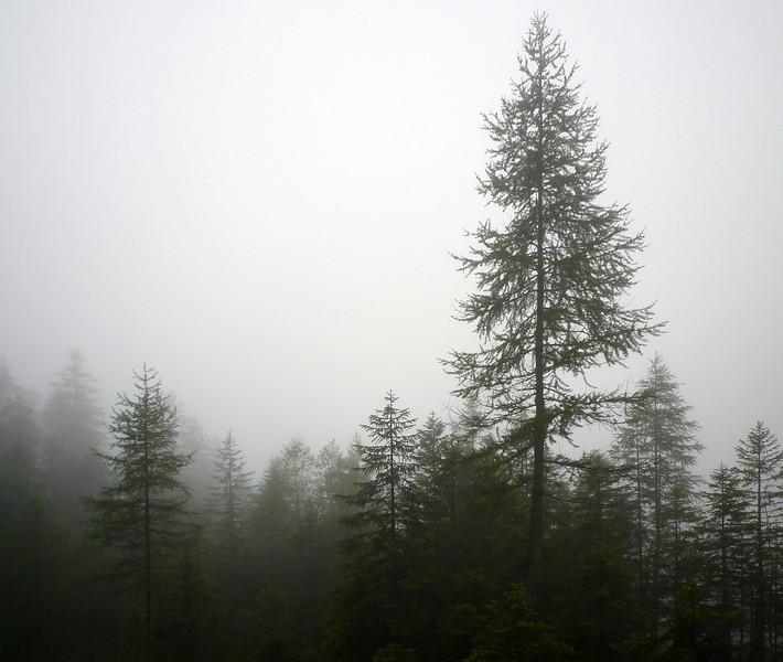 AdelbodenForest2