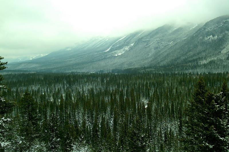 SnowyFirTrees2