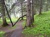 AdelbodenForest1