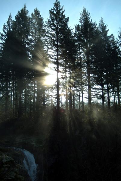 SunbeamFirTrees