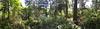 PointDefianceRhododendronGardenPanoramic2