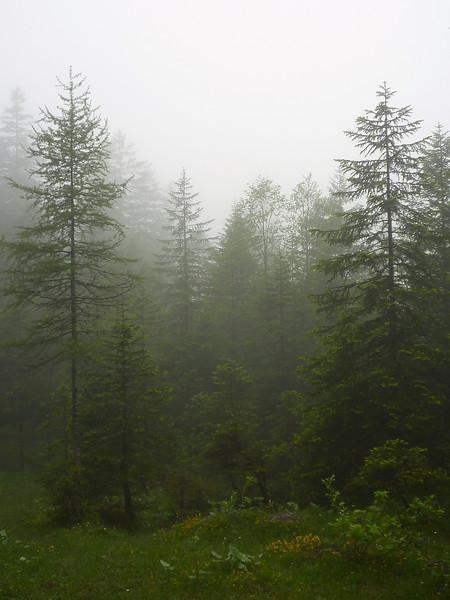 AdelbodenForest4
