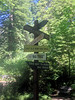 RedwoodsBigTreeSign2
