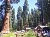 SequoiaNationalParkGiantForestMuseum