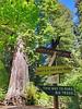 RedwoodsBigTreeSign1