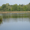De Wijers is een uniek gebied in Vlaanderen met maar liefst 1.175 vijvers, samen goed voor zo'n 700 ha water en riet. Dat zijn 1.400 voetbalvelden! Het is een thuis voor heel wat zeldzame dier- en plantensoorten. Zonder deze vijverstreek als 'kraamkamer' zouden soorten zoals bijvoorbeeld de Roerdomp en de Boomkikker in Vlaanderen al uitgestorven zijn. Daarnaast is dit een streek met een rijke culturele geschiedenis, een prachtig gevarieerd landschap, een bloeiende economie en toeristische topattracties als Bokrijk, Kelchterhoef, Hengelhoef, Domein Kiewit en Circuit Zolder. En dit alles in de directe omgeving van Hasselt en Genk.