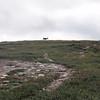 Opp en bakke rett etter lunsjpausen får vi øye på et par reinsdyr som spaserer oppe i høyden...