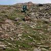 Hei hvor det går... til og med blomstene trives i fjellheimen. Her er john på vei opp Riarskaret  jevnt tempo.