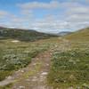 Stien videre mot Gjevilvasshytta.