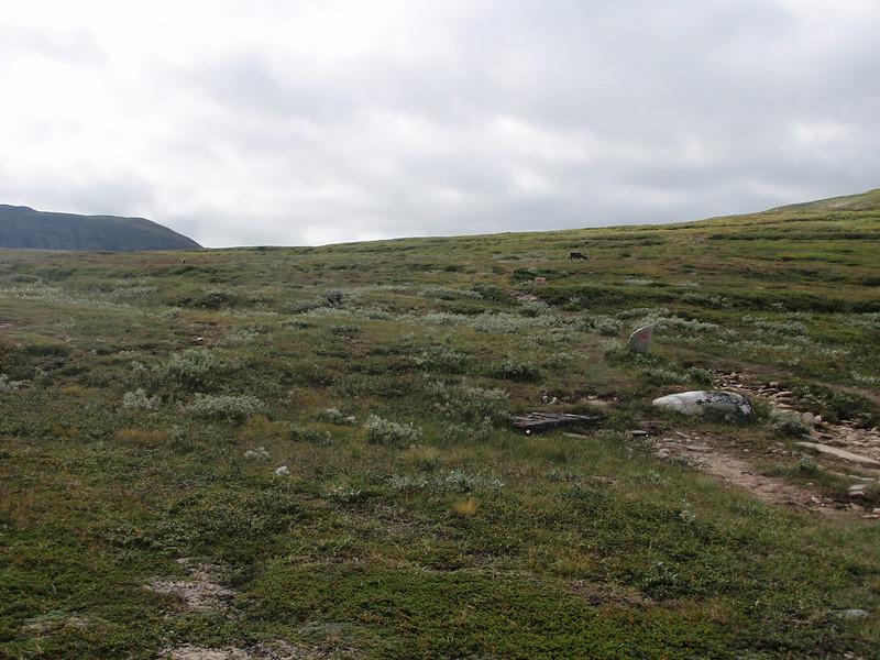 Hvis du ser godt etter kan du skimte reinsdyret nesten rett ved den rødmerkede stien.