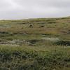 Nam nam, godt med turist-tråkket gress ;)