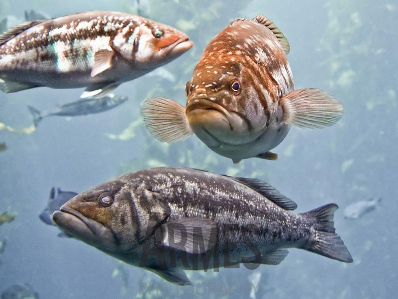 Fish<br /> Monterey Aquarium, Monterey, CA