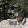 California Grey Squirrel (Otospermophilus beecheyi), Yosemite National Park, California