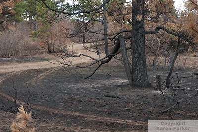 "Franktown, Colorado - ""Burning Tree"" Fire - March, 2011"