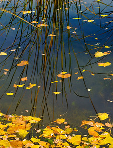 Leaves and reeds