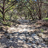 Dry Creekbed at Friedrich Park