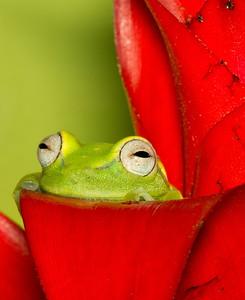 Frog and Lizard Shoot