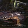 Mixed frogs - sammakot sekaisin 23