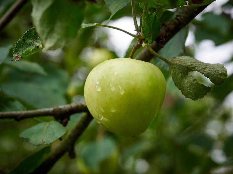 The Blond Apple