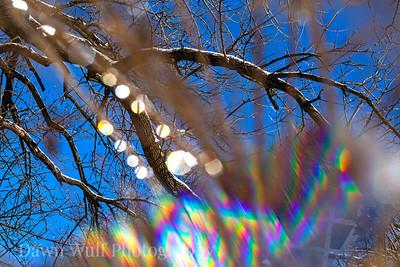winter prism 1