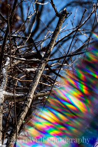 winter prism 4