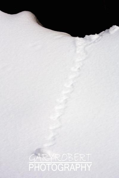 Natures Snowball