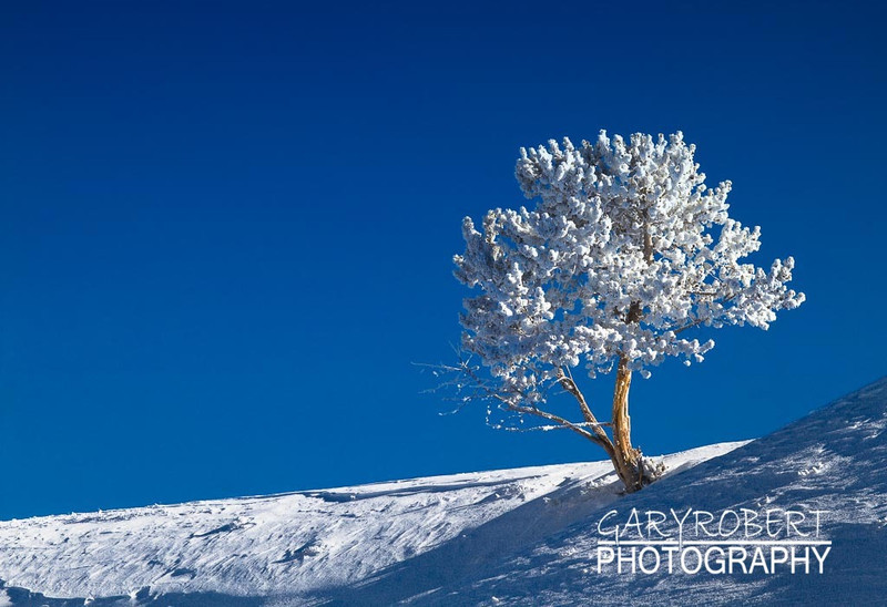 Frozen White