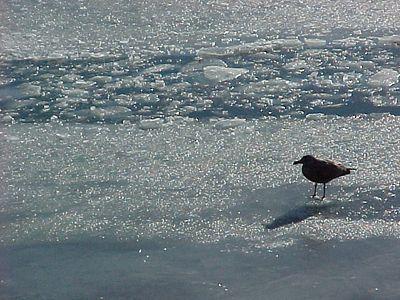 Frozen bay 2000