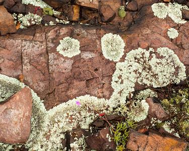 Fungi, Algae, Lichen-y