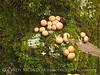 Fungi, Black Rock Mt St Park GA (1)